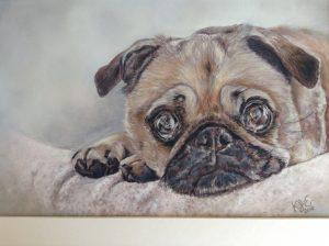 Pug Dog Pastel Portrait