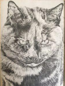 Graphite Pencil Cat Portrait Commissions Merseyside