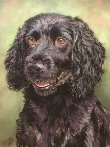 Bailey Black Spaniel Pastel Portrait